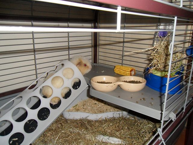 tunnel ramp for guinea pig's cage USING IKEA CARRIER BAG HOLDER!