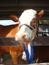 Tyrendarra Pastoral and Agricultural Show 2015
