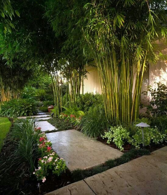 Tropical Style Backyard ~~ With an in-ground barrier, you could control invasive bamboo ~~ cool look.