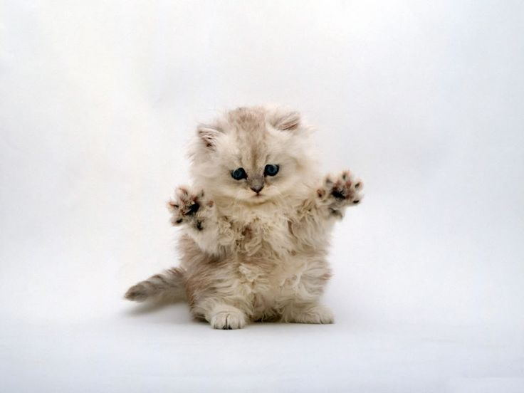 cute pictures of kittens - Bing Images