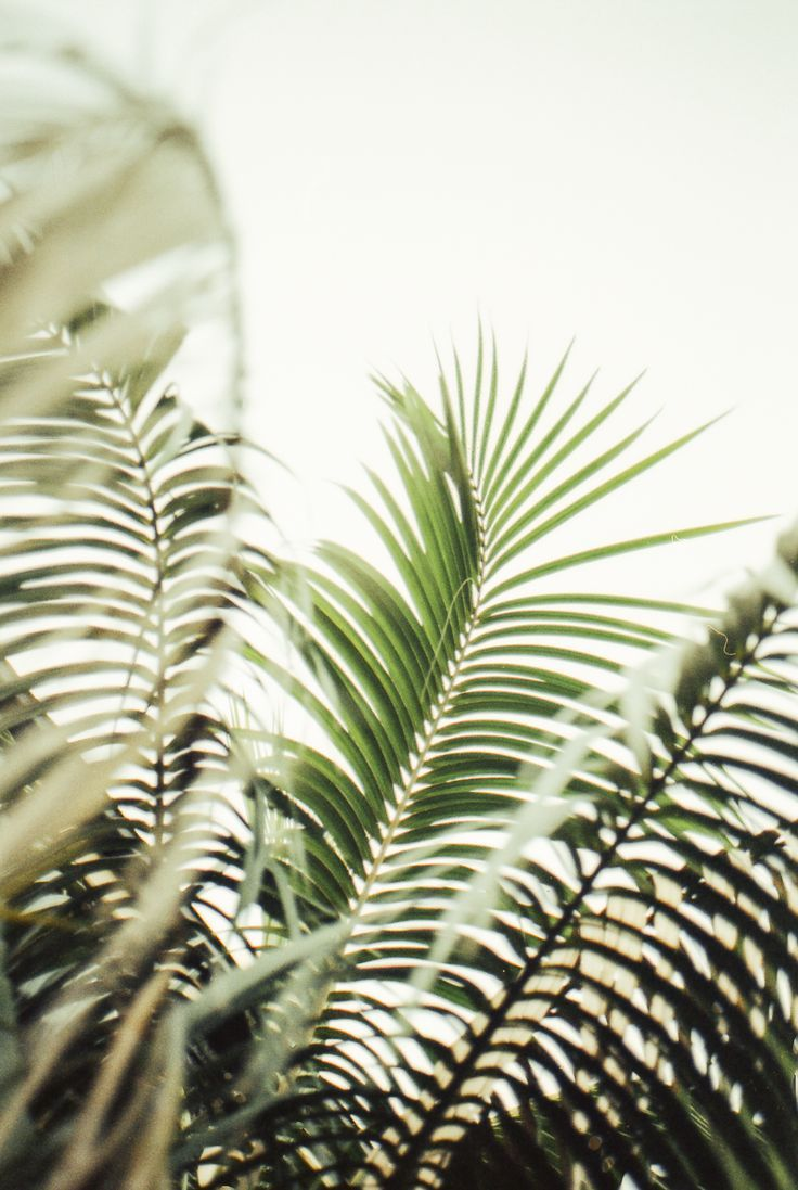 beachy palm tree life