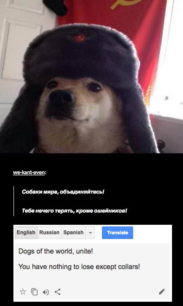 25 Fresh Tumblr Pics That Ll Turn Your Day Around Funquila Russian Cat Tumblr Funny Funny Tumblr Posts