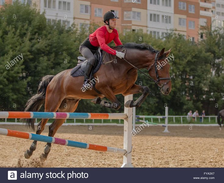 Download this stock image: Show jumping training - FYA3X7 from Alamy's library of millions of high resolution stock photos, illustrations and vectors.