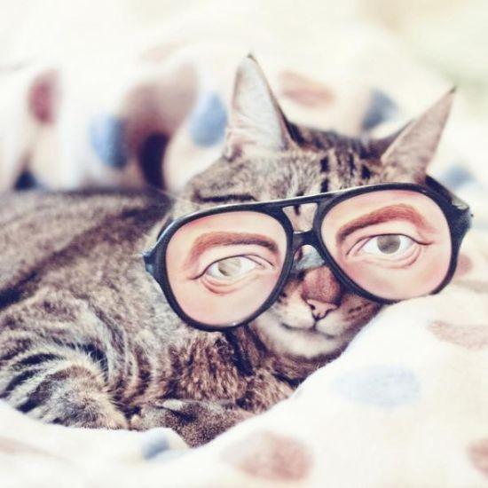 17 Best Images About Cats Wearing Glasses♥ On Pinterest