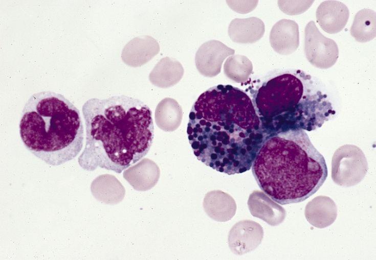 77 best learning molecular images on pinterest