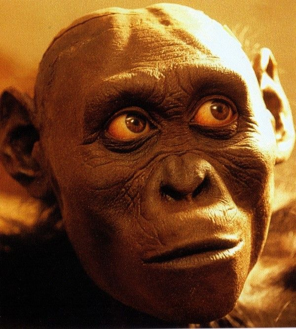 Australopithecus Afarensis Al 288 Quot Lucy