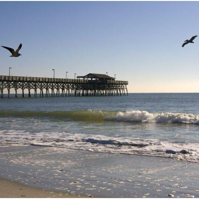 How To Find Conch Shells In Myrtle Beach