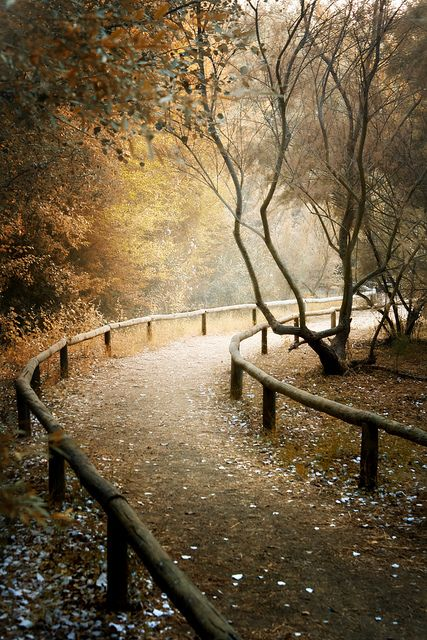 I'm always enamored by photographs of paths.  Just love this lighting.