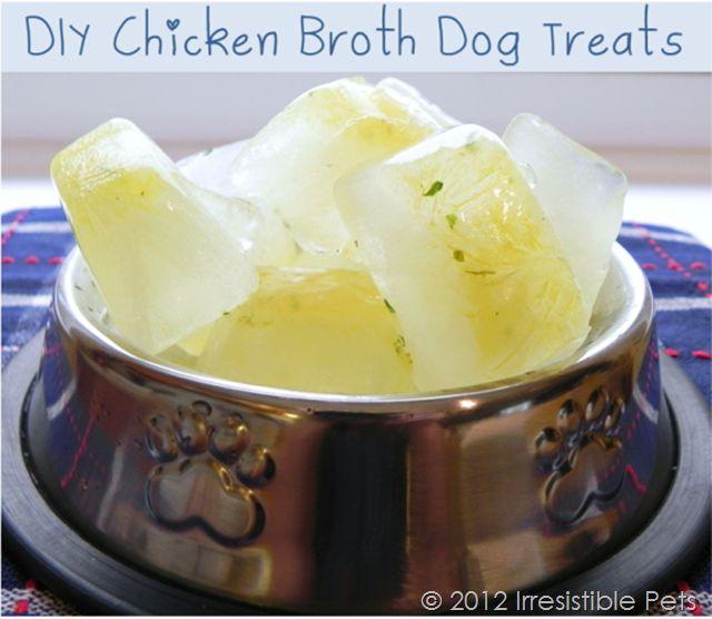 DIY Frozen Chicken Broth Dog Treats