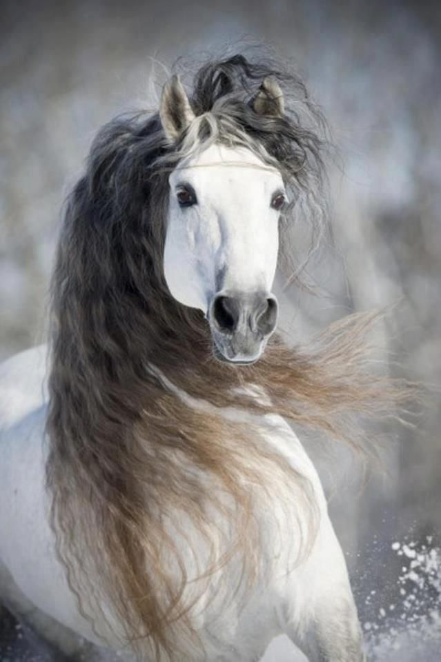 Horse horses. A horse carries a certain goodness, an inner light from which beauty flows.    http://www.annabelchaffer.com/categories/Equestrian-Gifts/