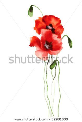 Google Image Result for http://image.shutterstock.com/display_pic_with_logo/820120/820120,1313598063,7/stock-photo-two-poppies-82981600.jpg