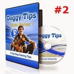 Stop Your Dog Chewing The Leash -  Our second installment of Doggy Tips Video Series 1 is a simple, yet effective tip on how to stop your dog from trying to show you that it's in charge. If you have a dog that's constantly biting, chewing and pulling on the leash, then try this technique and start enjoying your walks again!
