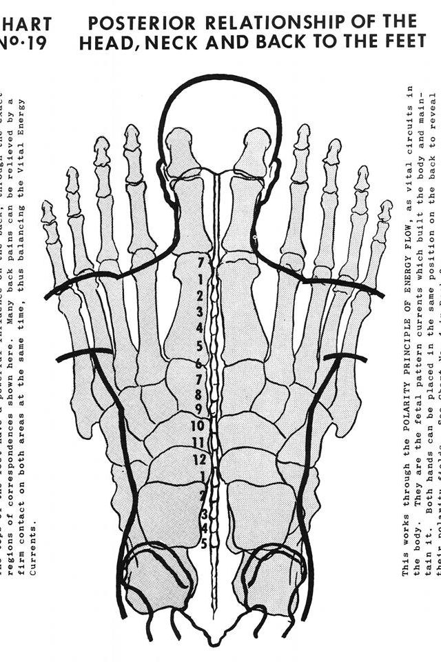 Excellent map of how the spine/body overlays the hand in reflexology.