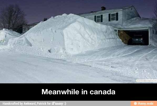 Very common in Barrie, ON, where they get hit hard every year...