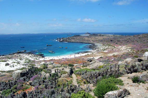 Playa La Poza en Isla Damas - Con arena blanca y aguas verde esmeralda playa La Poza es una de las playas ... - http://turistips.com/playa-la-poza-en-isla-damas/