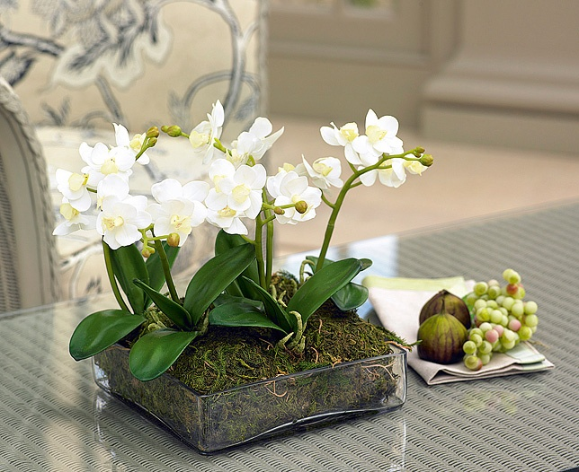 White Petite Phalaenopsis Orchid Centrepiece