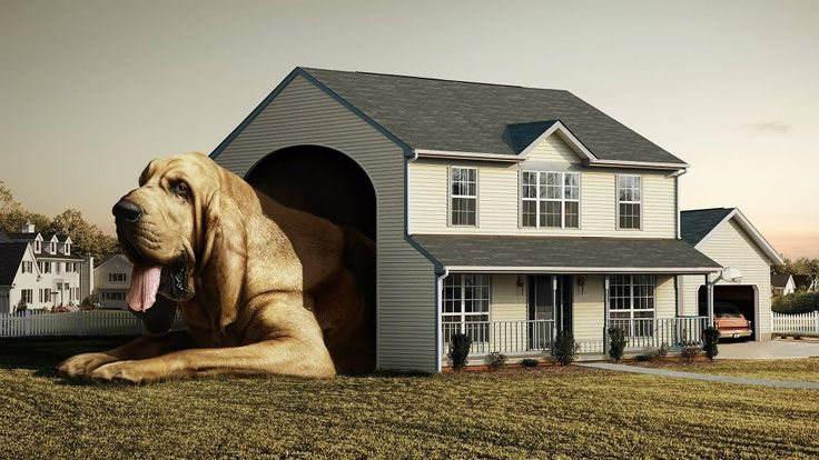 Dog Houses For Large Dogs – Finding dog houses for large dogs is not always that easy, most retail outlets have limited options so online is the answer.