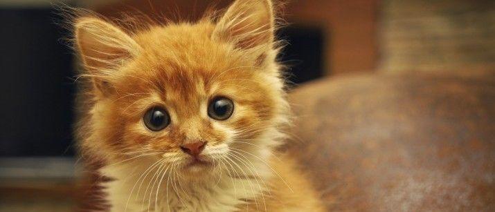 FLUTD – Why My Cat Can't Pee – Pawtorium