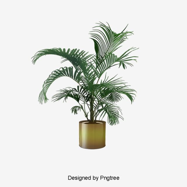 Indoor Plant Potted Plants Png Free Download Plant Clipart Plants Clipart Potted Plants Png Transparent Clipart Image And Psd File For Free Download Plants Plant Background Indoor Plants