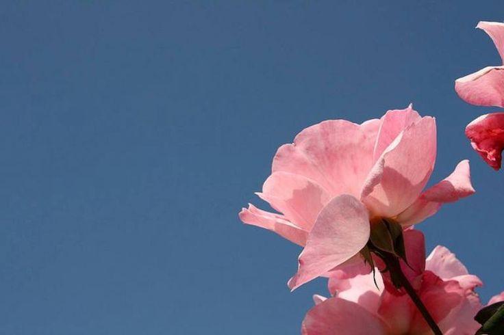 Sulle ciglia addormentate di ritorno al sole, nell'attimo in cui teneramente sfioro il tuo viso, s'apre la rosa del giorno a schiudersi sui miei occhi, cosi che ogni pensiero sia come un bacio sbocciato fra le labbra.  Alessandro Floris