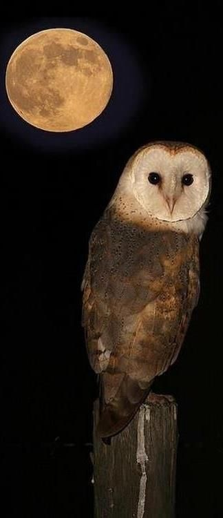 ...the beauty of the moon brings out the beauty of the owl...