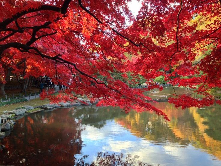 盛岡の紅葉の名所「盛岡市中央公民館」庭園。
