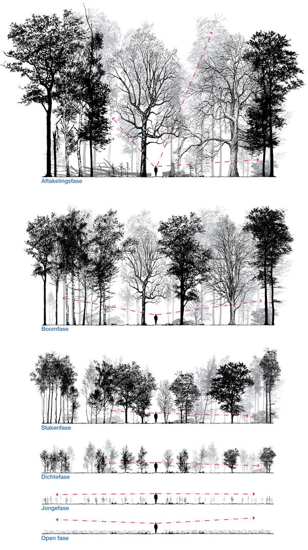 Patrick Ruijzenaars / In imagining and designing forest is frequently talked about the final stage. Equally interesting is the way to get there. It takes many human lives, indeed a lifetime, for them to mature and a young forest is often the least interesting. This series of drawings shows the experiential value of planted forest in different stages of the forest. By manipulating the planting method the experiential value will be increased, by structural variation, which makes the forest...