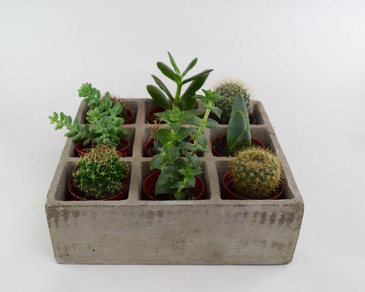 Let's play tic tac toe! succulents vs cactus!