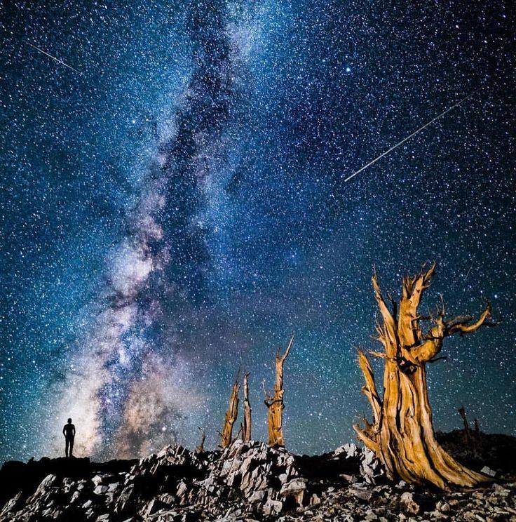 いいね!101.6千件、コメント565件 ― Wonderful Placesさん(@wonderful_places)のInstagramアカウント: 「Bristlecone Pine Forest - California ✨🌲🌲🌲✨ Picture by ✨✨@travisburkephotography✨✨ .…」