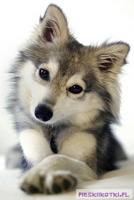 Image result for sweet dog