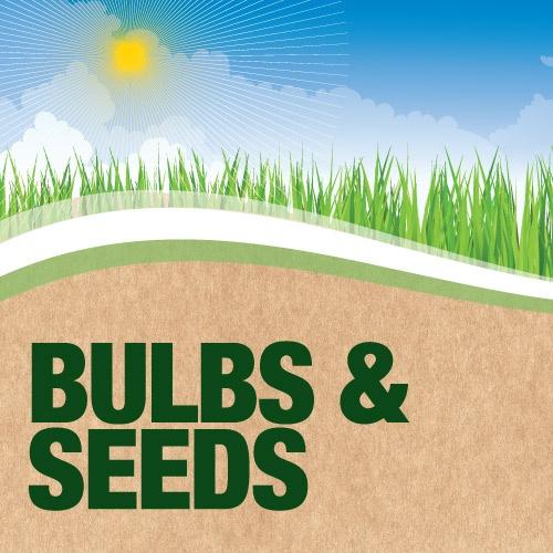 Bulbs and Seeds | Poundland