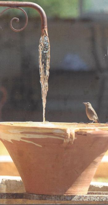 The French Tian | Maison and Co.  Beautiful faucet, rustic pot, lucky birdie :)