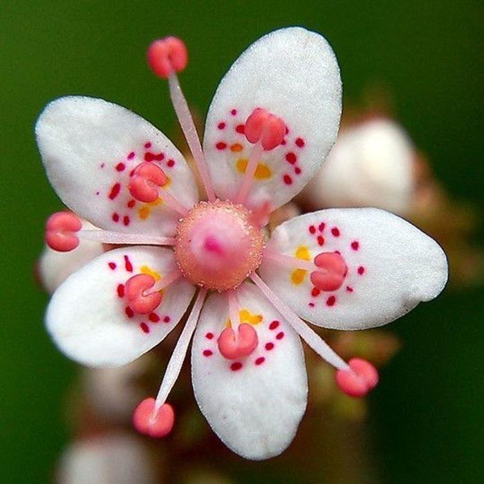 или картинка удивительного цветка курорт