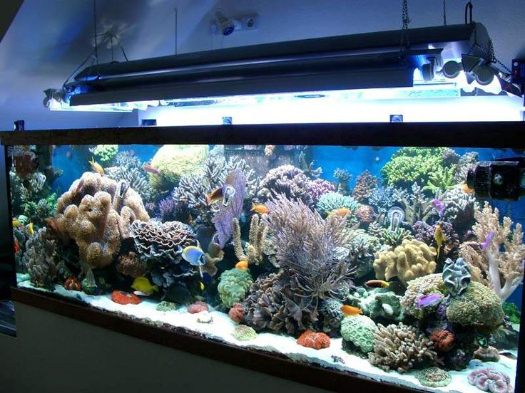 Les 25 meilleures id es de la cat gorie aquarium eau de for Aquarium plastique