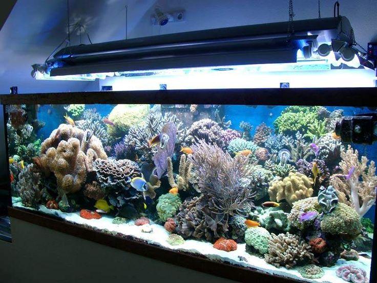 les 25 meilleures id 233 es de la cat 233 gorie aquarium d eau sal 233 e sur poissons d eau
