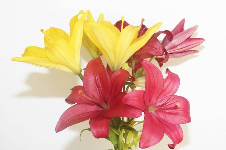 Liliesinatube is delivering long lasting elegance flowers in a tube only for just $47.