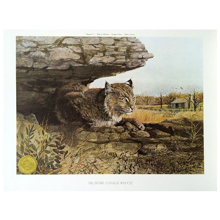 Print - Bobcat, Bethel College Wildcat by Ralph J. McDonald