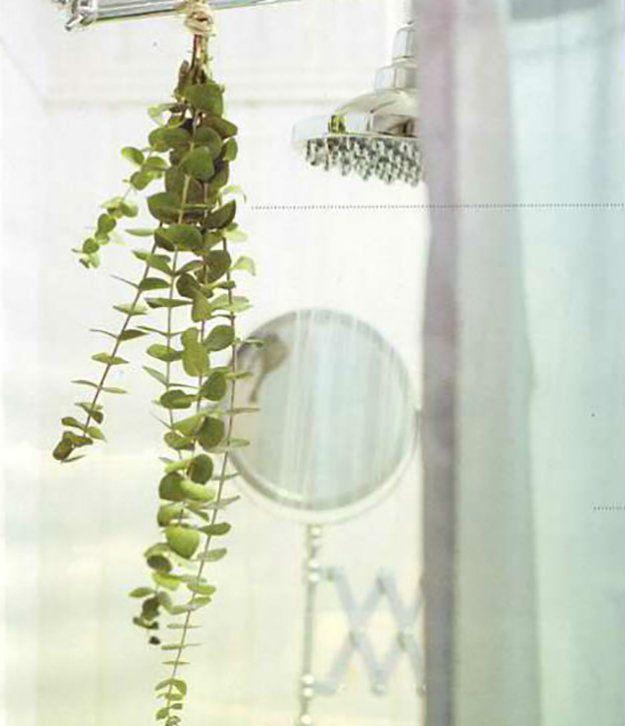 DIY Herbal Home Eucalyptus Shower Bundle   26 Home Remedies for Cold and Flu Season