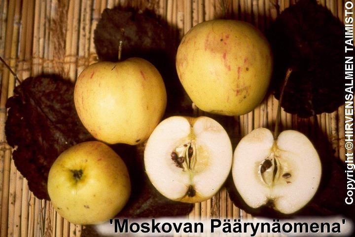 Yli 100 vuotta sitten Pietarista, Regelin puutaimistosta, Mustialan koetarhaan tullut lajike, jonka nimi oli tuntematon. Prof. Meurman nimesi lajikkeen Moskovan Päärynäomenalsi, sen venäläisen alkuperän ja päärynämäisen arominsa johdosta. Hedelmä keskikokoinen, keltainen, lievästi punaviiruinen. Maku hieno viinihappoisen ryytimäinen. Hedelmien tulisi antaa kypsyä puissa täysin kypsäksi, silloin aromi on parhaimmillaan. Kestävä ja terve lajike. Sopii myös savimaille. Sopii luomuviljelyyn.