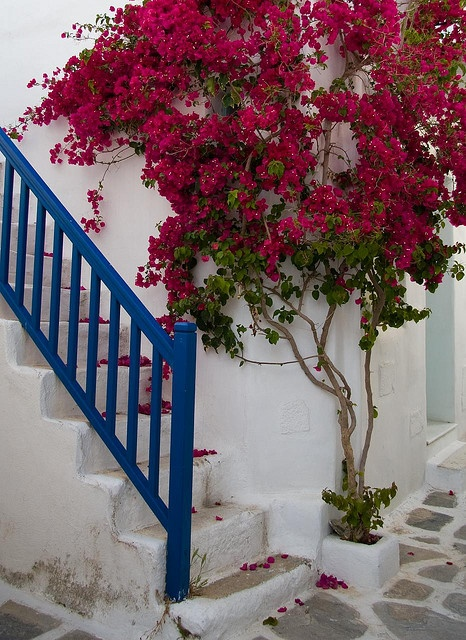 bougainvillea stairs