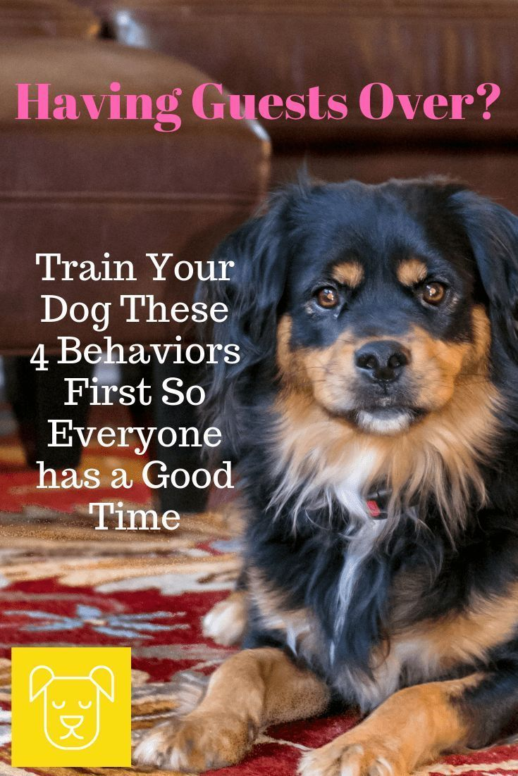 Behavior Modification In Dogs Dog Owners Training Your Dog