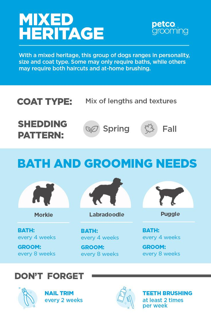 Mixed Breeds And Rescues Have A Wide Range Of Bath And Grooming