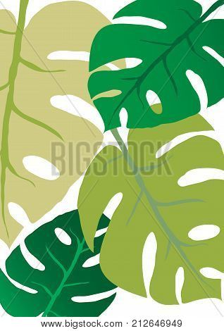 Big green leafs of Monstera plant on white background #art #background #beautiful #beauty #big #botany #branch #clean #climate #detail #discovery #drawing #environment #evergreen #exotic #flora #floral #foliage #freshness #gardening #green #growth #illustration #isolated #leaf #life #macro #monstera #natural #nature #object #organic #paint #pattern #plant #single #striped #surface #texture #textured #tree #tropical #vibrant #vitality #white