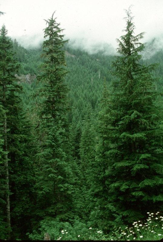 Travel Photo Thursday -- June 27th, 2013 -- Traveling ... |Washington Evergreen Trees