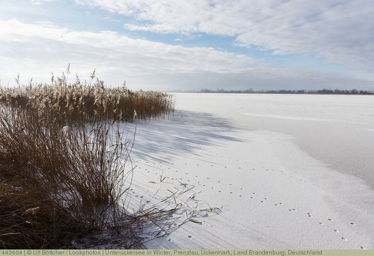 Unteruckersee in Winter, Prenzlau, Uckermark, Land Brandenburg, Deutschland