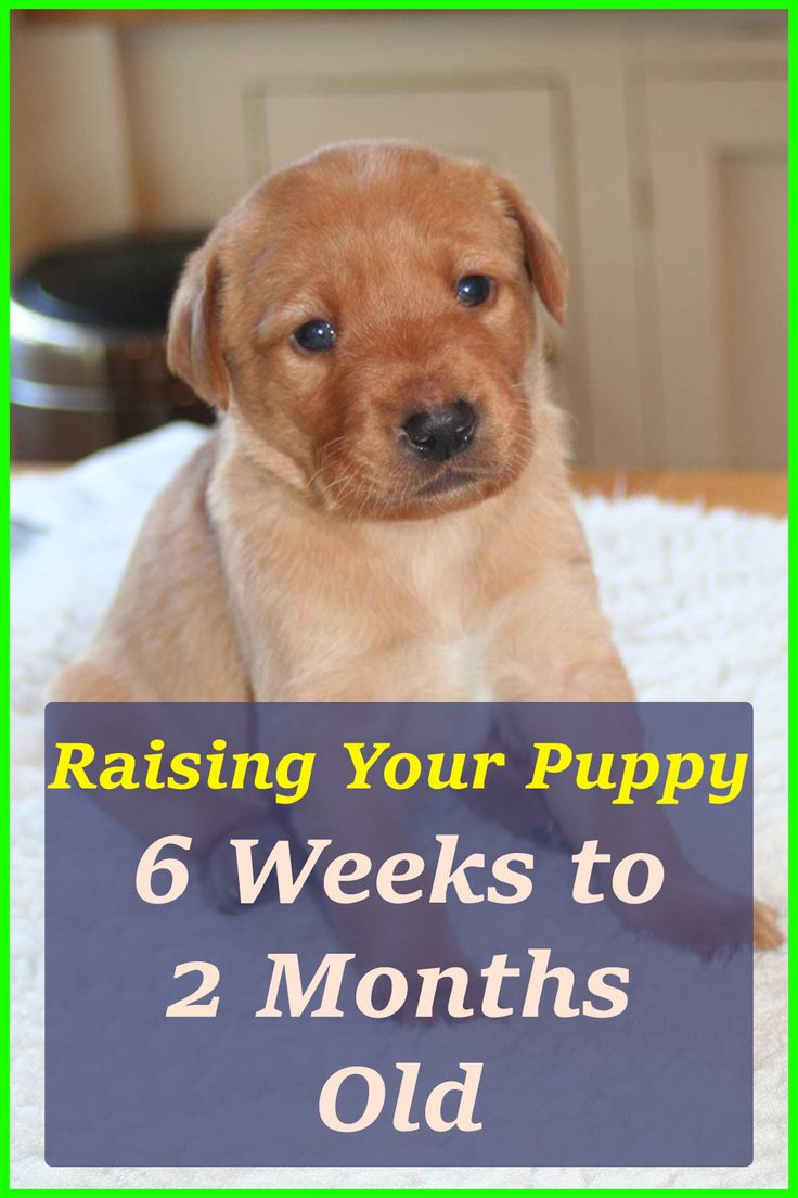 Raising Your Puppy Important Steps to Take From 6 Weeks