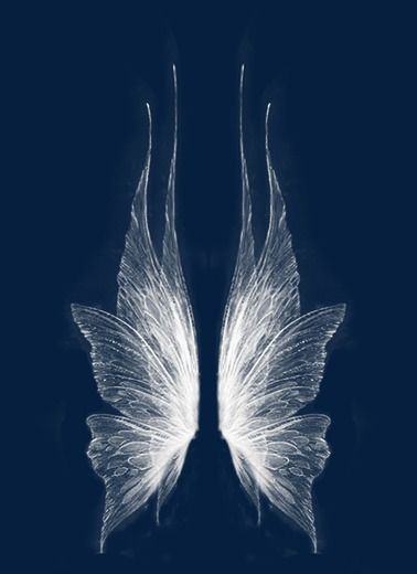 Wing In 2019 Wings Drawing Fairy Wings Drawing Fairy