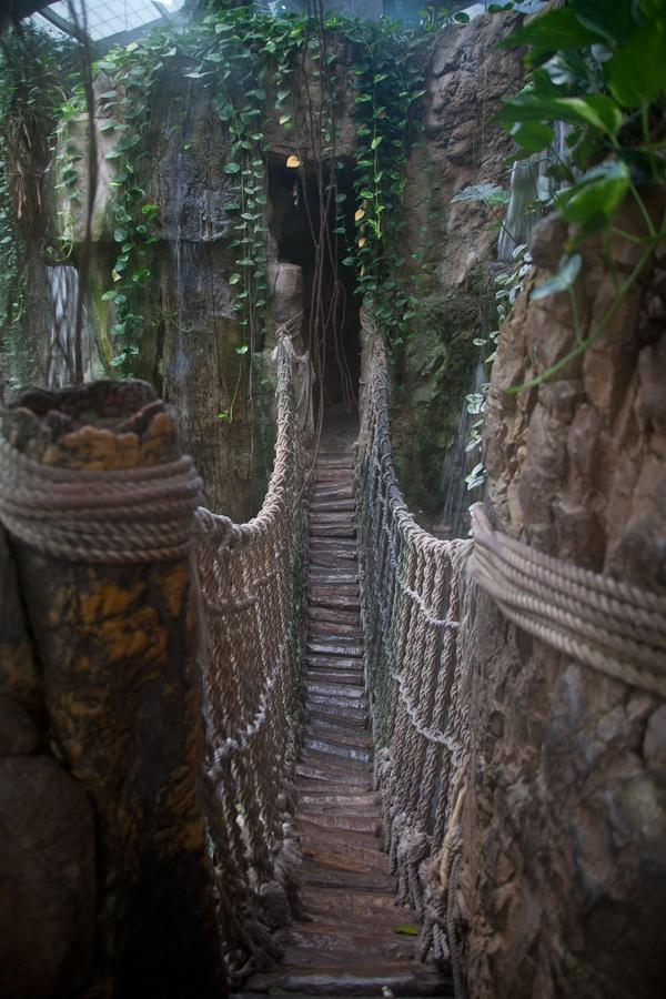 Bridge in the Rain Forest at the Henry Doorly Zoo in Omaha, Nebraska - Like Tropical World, but in America!
