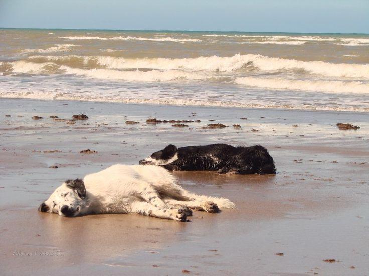 #playa #paisajes #olas #animales