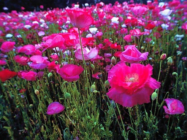Nature fleur recherche google nature pinterest for Offre des fleurs